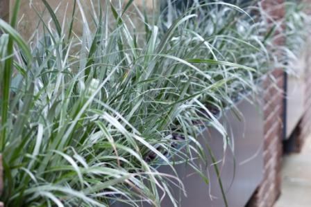 Plants to soften buildings
