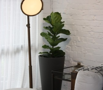 Hire plants for Sydney office
