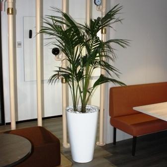 Plants to rent Sydney