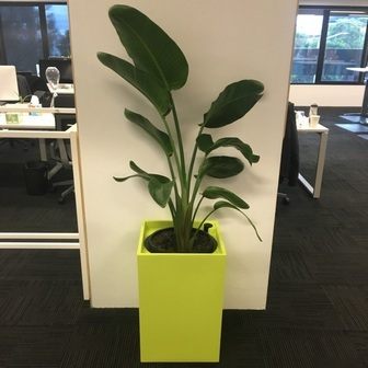 Hire office plants Sydney