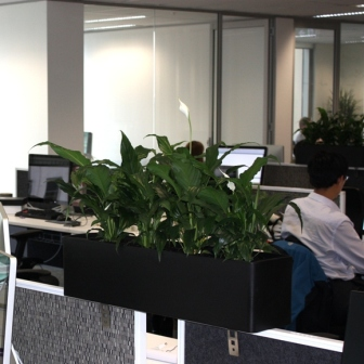 Plants to rent Sydney