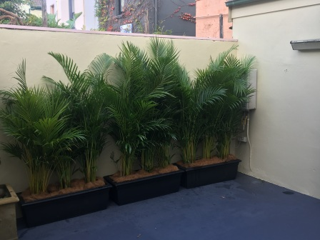 Short term hire plants Sydney