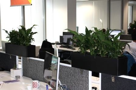 Sydney office plants