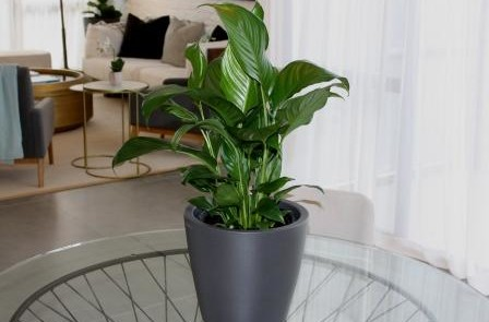 Desktop plants for office