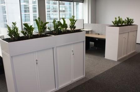 Sydney office plants