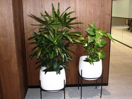Office hire plants