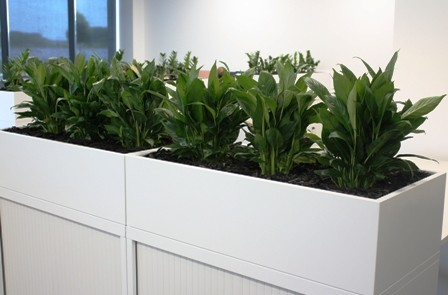 Office hire plants in cabinet planters